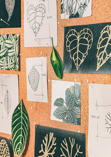Moodboard au département création de Kor Landa, feuilles et motifs végétaux.